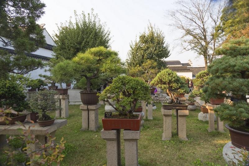 Suzhou en china - Jardin de bonsais ...